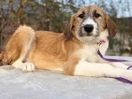 Primăria Apahida anunță o campanie de ridicare a câinilor fără stăpân din localitate